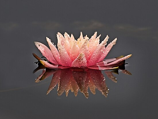 Pink and Rain by Kathy Weaver