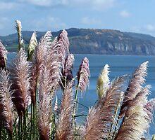 Pampas Grasses ~ Lyme Regis by Susie Peek