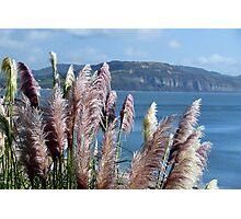 Pampas Grasses ~ Lyme Regis Photographic Print