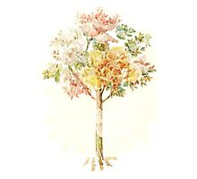 A Summer Tree - Digital Art  Photographic Print
