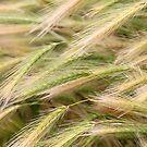 Grain III by vbk70