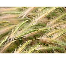 Grain III Photographic Print