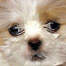 Poofy Puppy by Sviatlana