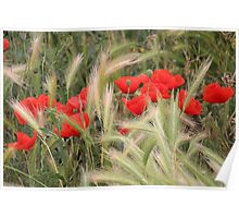 Grain and Poppies Poster