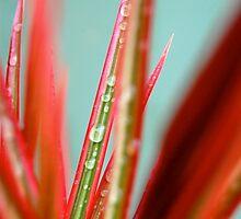 Wet Plant by Lauren Waters