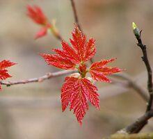 New Beginnings by NatureGreeting Cards ©ccwri
