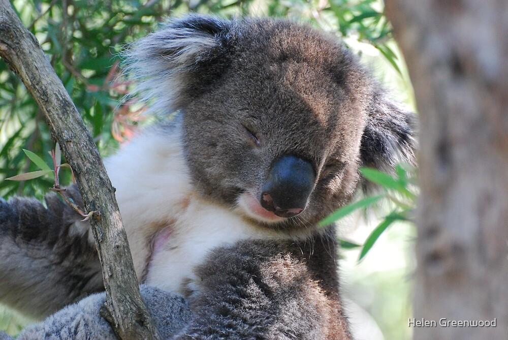 Snoozing Koala by Helen Greenwood