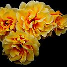 Yellow Roses by vbk70
