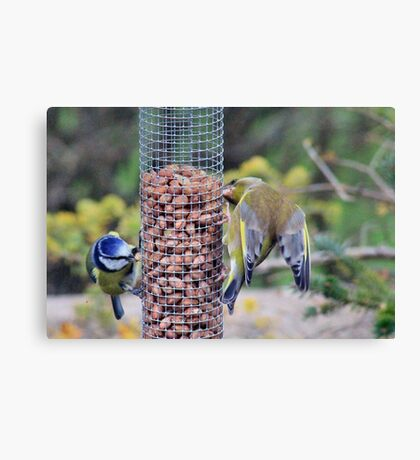 Nuts for peanuts Canvas Print
