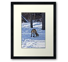 Well, That's Embarrassing - Red Fox Framed Print