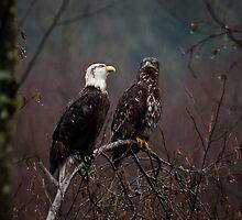 Talking Eagles by Appel