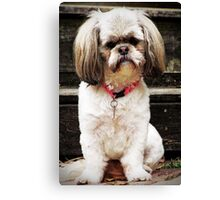 Little Sophie Canvas Print