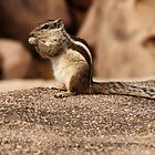 chipmunk by dynamo17
