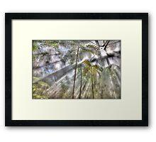 Light Streaming Rainforest Dreaming Framed Print