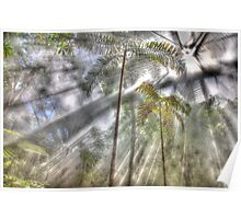 Light Streaming Rainforest Dreaming Poster