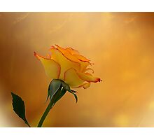 Rose Beauty Photographic Print