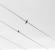 Wire by Geoff Harrison