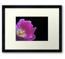 Lovely Tulip. Framed Print