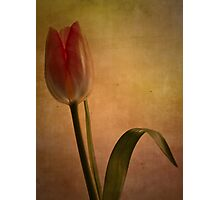 Looking forward to spring Photographic Print