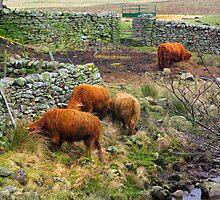 Farmyard by Trevor Kersley