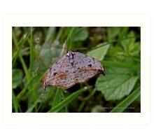 Pebble Hook-tip moth Art Print