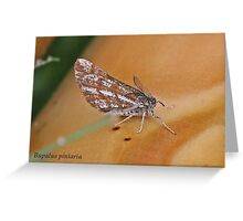 Bordered White moth Greeting Card