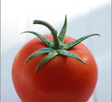 Cherry Red Tomato by Sandy  Taylor Photography