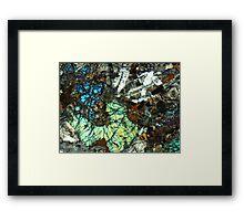 537 Framed Print
