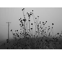 Flowers and Fog  Photographic Print
