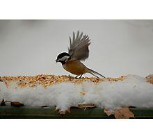 am chick Photographic Print