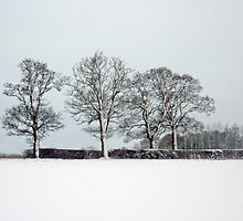 Across a snowy field in Bintree Norfolk by johnny2sheds