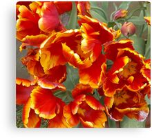 Cathedral Tulips Canvas Print