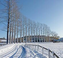 Snow on the Road and Poplar trees in rural Norfolk by johnny2sheds