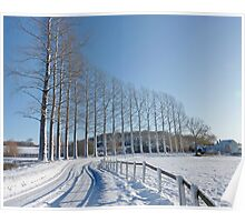 Snow on the Road and Poplar trees in rural Norfolk Poster