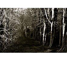 Winter pathway Photographic Print