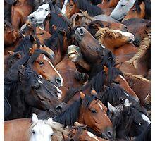 Wild Horses1 Photographic Print