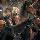 Spaniard Wild Horses 3 by Carlos Casamayor