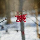 Red Berries in Winter by Yuri Lev