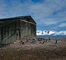 Penguin's Backyard by Craig Baron