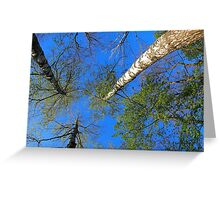Three birch trees on the background of the sky Greeting Card