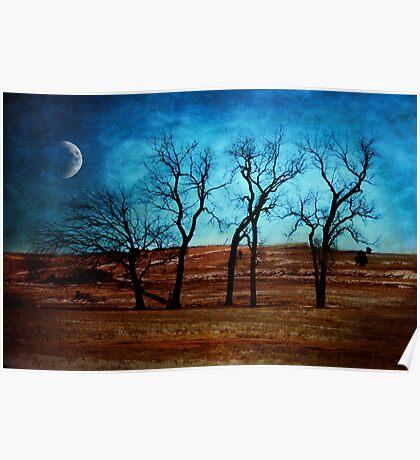 Midnight In Winter's Garden Poster