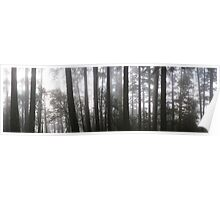 Muir Woods-Marin County, CA Poster