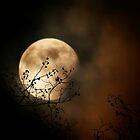 Lua by Ingrid Beddoes