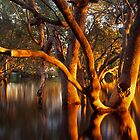 Mangrove dawn, Lota Creek, Brisbane by Robert Ashdown