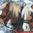 Frosted Horses by Alyce Taylor