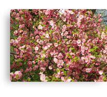 Pink flowers background Canvas Print