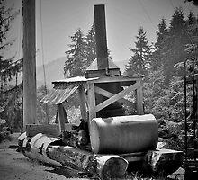 Mule, Camp 18, Oregon by Pete Janes
