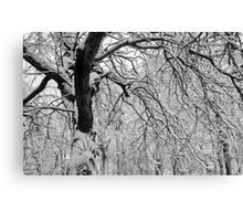 Frozen Forest Canvas Print