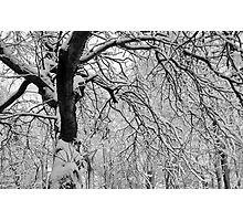 Frozen Forest Photographic Print