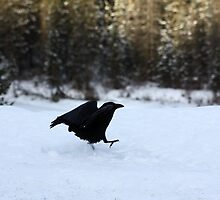 Running in the Snow by Alyce Taylor